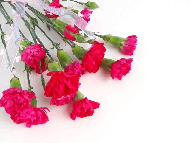 carnation3