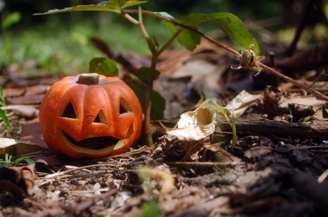 halloween-kabotya16090208