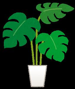 風水 観葉植物 寝室 種類 方角