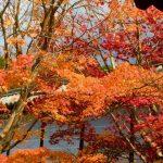 東福寺 紅葉 混雑 朝 時間帯