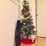 クリスマスツリー 猫 対策